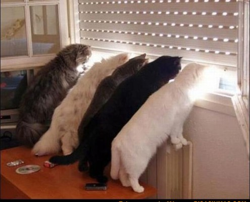 curiosidad-nivel-gato1